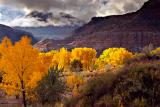 Golden Cottonwoods in Coal Wash.jpg