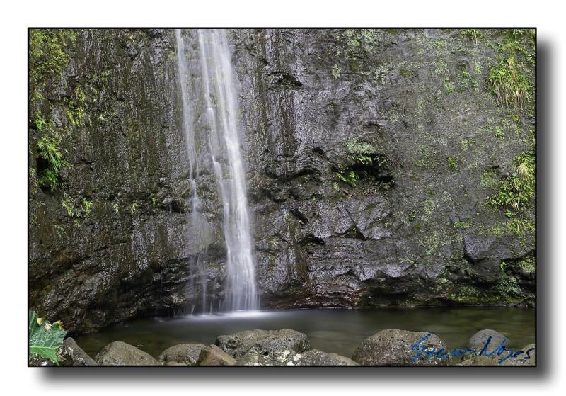 Hawaii: Manoa Falls : Week 10