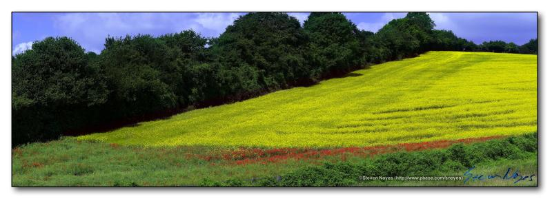 Rapeseed Panoramic : Week 2