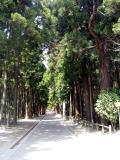 Sacred Cedar Grove