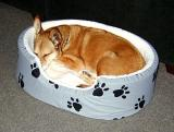 Taco's bed.  Well, really she slept with me.  This was in my office.
