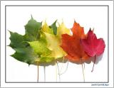 Leaf Arrangements