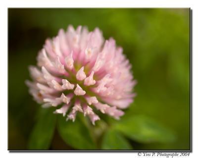 Shallow Flower ...