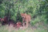 Kruger National Park 2001