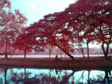 Same image, rendered in Infrared.