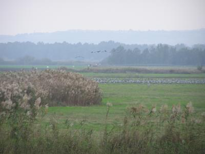 30K Cranes waiting for sundown