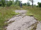 Top of ridge where raided turtle nests were located
