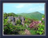 Trail to Birobong Peak
