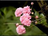 West Virginia ~ Wildflowers ~ 2002 - 2003