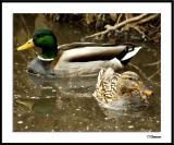 2/5/05 - Ducky