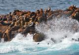 Frolicking Sea Lions