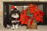 Christmas Ricky 2003