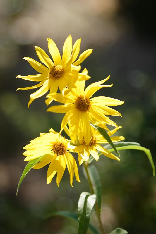 YellowFlower-0001-after.jpg