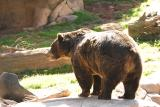 Grizzly-0003.jpg