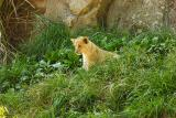 Lioness&Cubs-0010-after.jpg