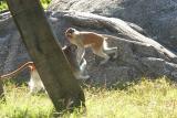 Monkeys-0003-after.jpg