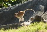 Monkeys-0006-after.jpg