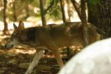 RedWolves-0002-after.jpg