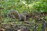 Zoo Squirrel 1