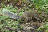 Zoo Squirrel 2
