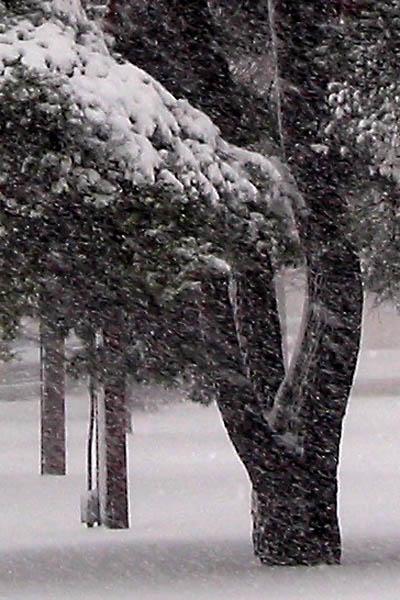 snow_03.jpg
