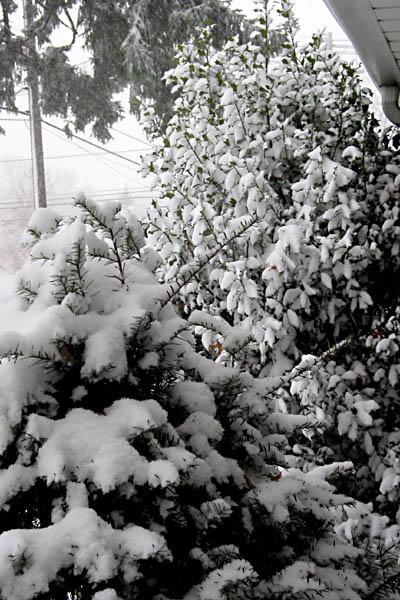 snow_03b.jpg