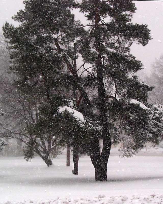 snow_03d.jpg