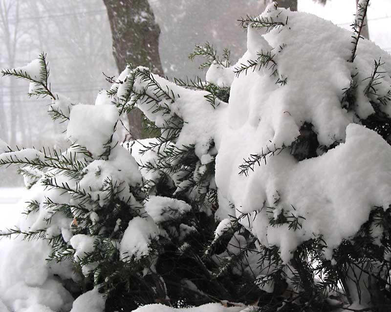 snow_03e.jpg
