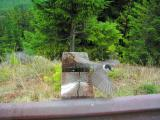 Bird, Hurrican Ridge, Olympic N.P.