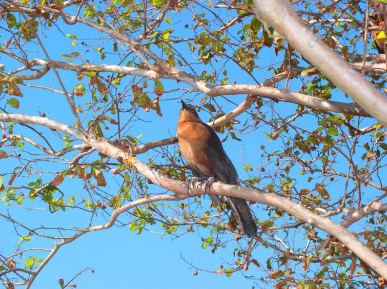 Bird at Downtown Disney