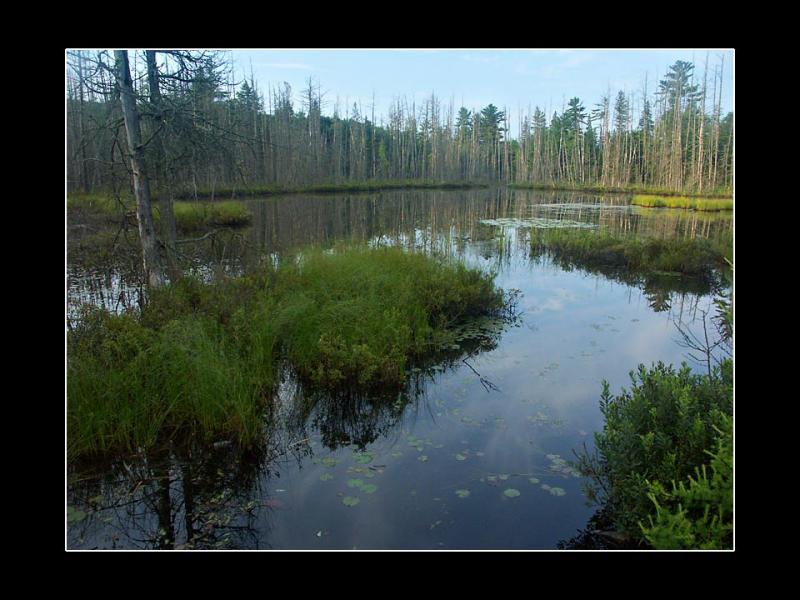 Swamp Morning