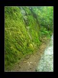Mossy Wall