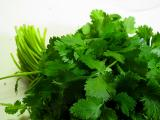 coriander - I love it and hate it