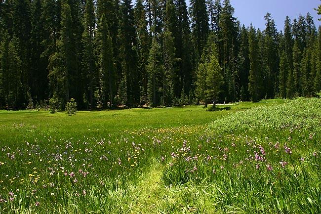 Summit Meadow