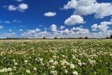 Cloverfield - Canterbury Plains