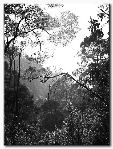 Forest near Lorne