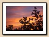 Sunrise for the Japanese Pines