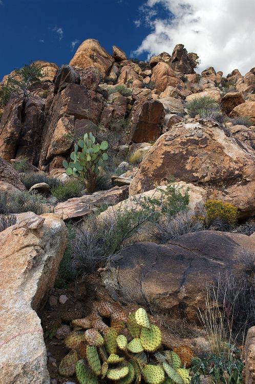 Cactus on the Cliff.jpg