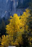 Late fall, Yosemite style