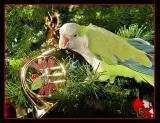 HM (tie)Partridge in a pear tree? by Katherine Kenison