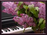 Lilacs and a Songby Johnny B.