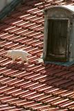 white-cat-on-roof.jpg