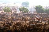 The-camel-fair-in-full-swin, Vagabond Magazine