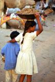 gathering-camel-dung.jpg