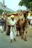 camel-transport.jpg