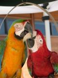 Macaw Test 01