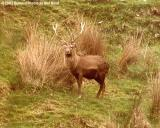 Large deer stock photo