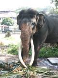 Elephant in Viharamahadevi Park