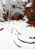 Winter Snow, Oak Creek Canyon