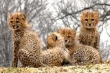 Gallery - Wildlife and Zoo life
